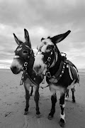 Donkeys on Blackpool Beach.