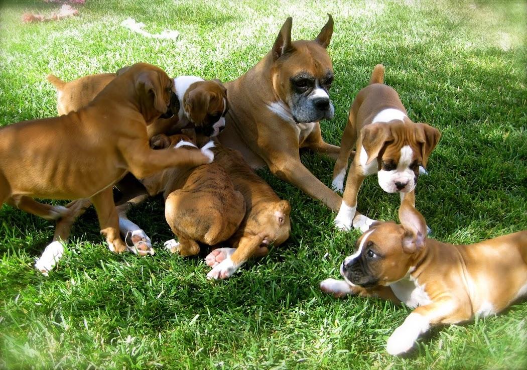 Bishop's Boxers