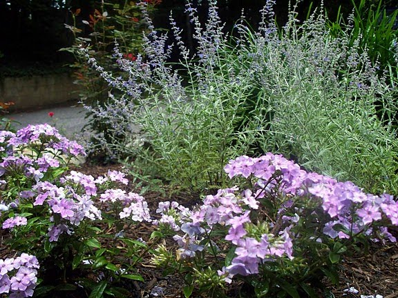 Russian Sage and Lilac Garden Phlox