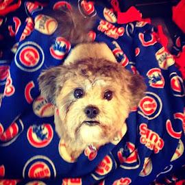 Puppy Girl Ember