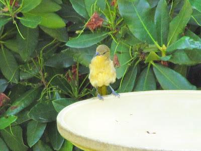 bird on bath