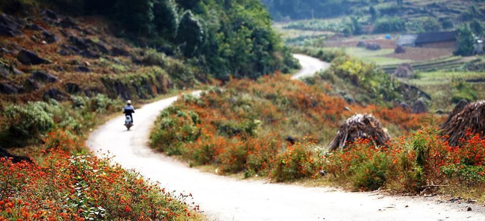 mùa cúc dại Hà Giang