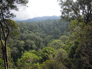 GUNUNG LEUSER NATIONAL PARK VIEW IN BUKIT LAWANG