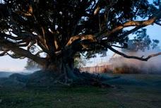 The beloved Tree