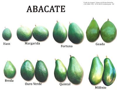 Variedades de abacate