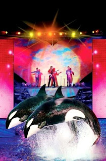 Sea World Orlando Florida (Best Honeymoon Destinations In USA) 8