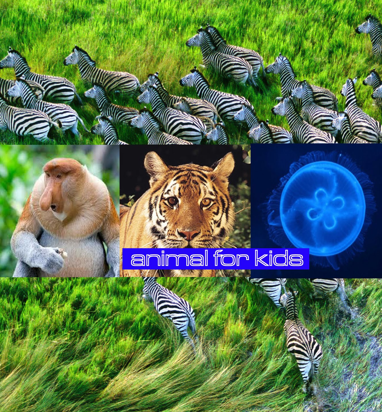 Animal for Kids