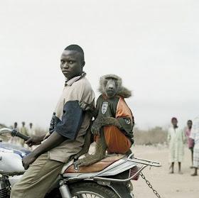 Peliharaan Orang Afrika