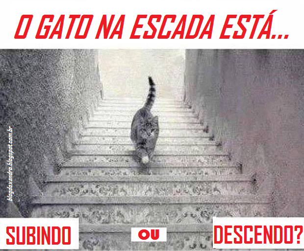 gato.png (620×512)