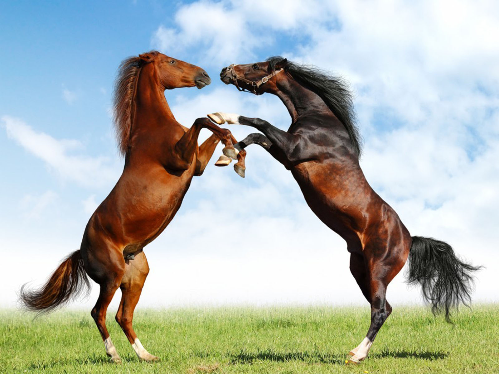 wallpapers horses wallpapers