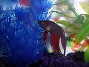 My fish: