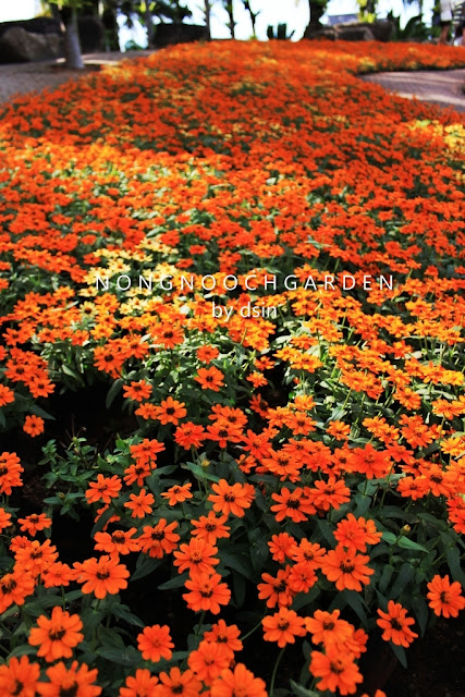 Nong Nuch Garden Pattaya