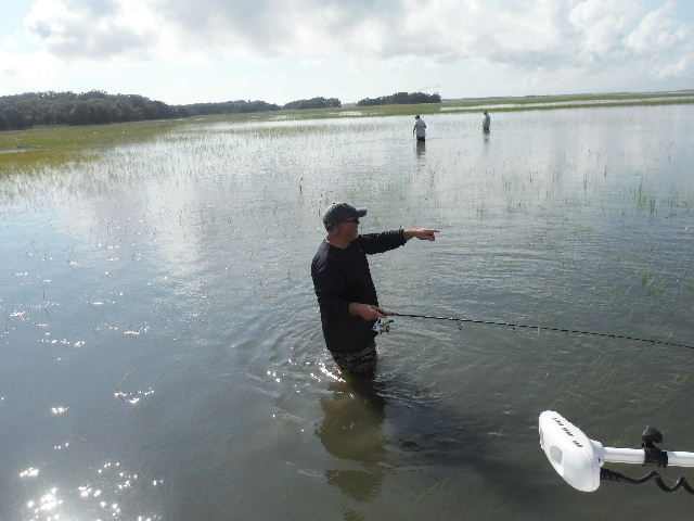 Amelia island fishing reports chasing tails in the grass for Chasing tails fishing report