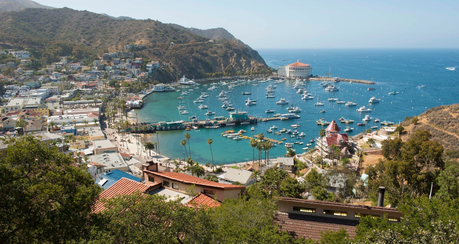 Ucr iep blog my adventure on santa catalina island for The catalina