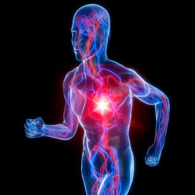 Obat Inflamasi Jantung Herbal Alami