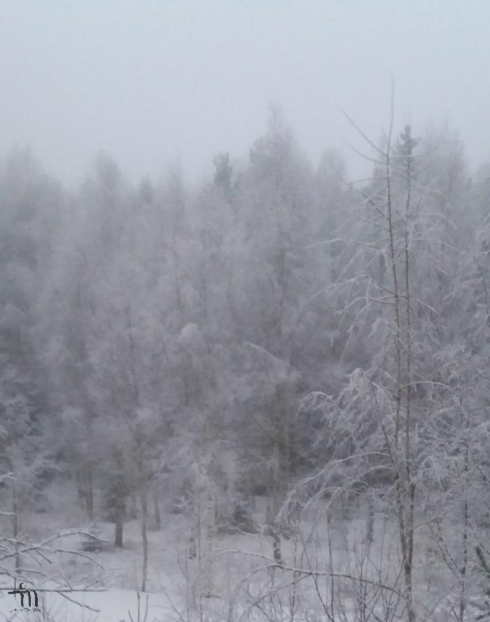 huurteinen talvimaisema
