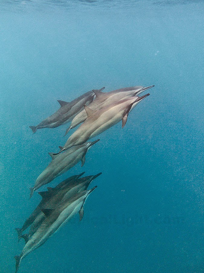 http://www.tropicallight.com/water/dolphins/26aug14dolphins/26aug14dolphins.html