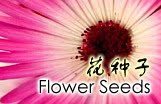 Buy Flower Seeds Online