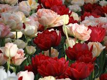 Ottawa's Tulip Festival