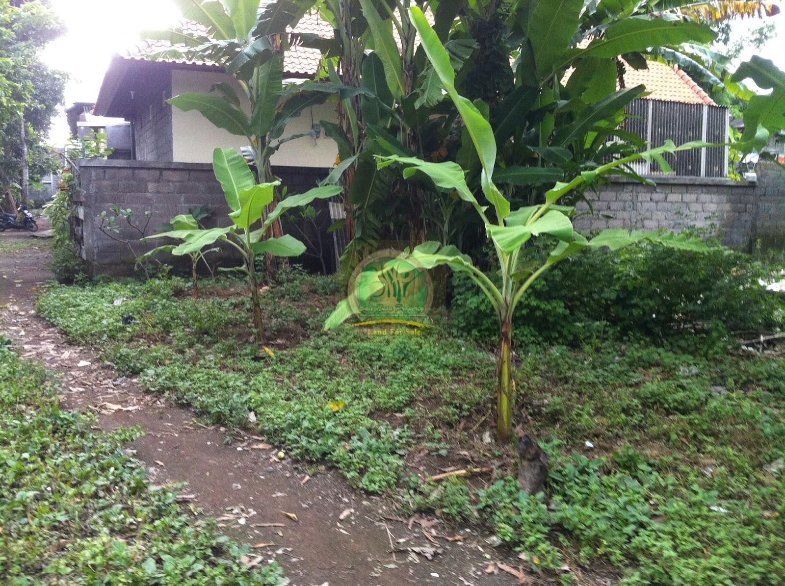 tanah murah di denpasar Bali