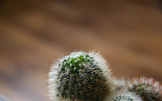 Little Cactus HD Wallpaper 1920x1200