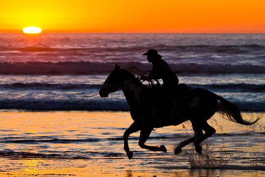 Horse Running On Beach During Sunset