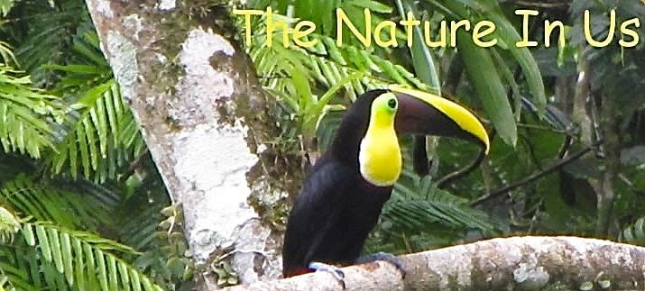 The Nature In Us