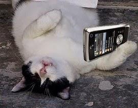 bahaya tidur di dekat handphone