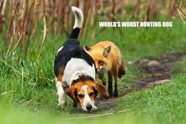 Crummy Hound