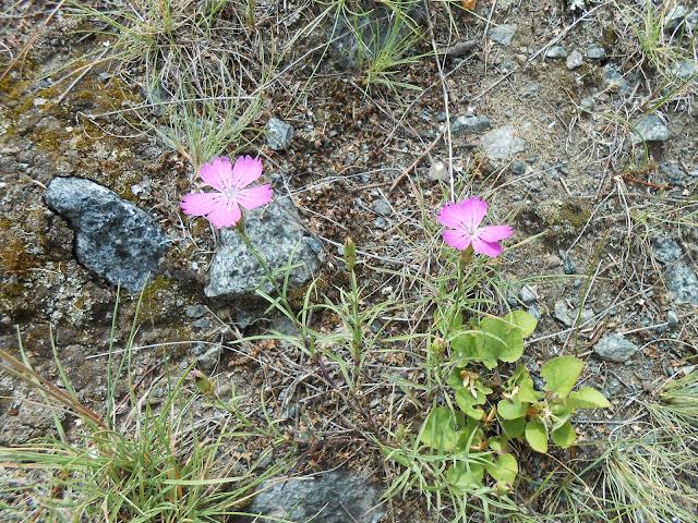 цветы и камни на берегу озера Большие Касли