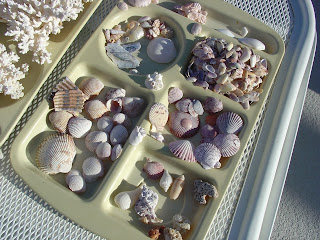 shells picked up off of Boca Grande Beach