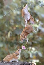 A confiança tranquiliza a alma  gera harmonia