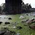 Kemarau Panjang, Sampah Menumpuk Di Sungai