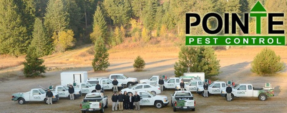 Bugs - Pest Control - Animal Control - Pointe Pest Control