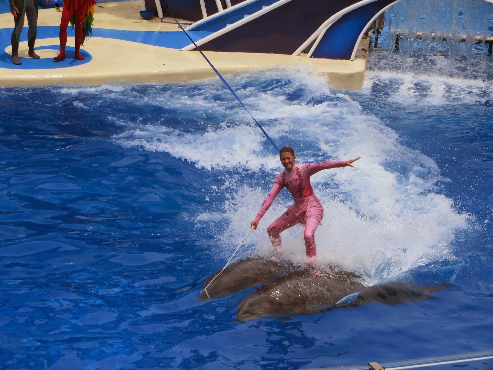 dolfijn die gevangen zit