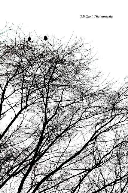 IMAGE: http://4.bp.blogspot.com/-vGx3zI0nTTY/UQRf6qdopNI/AAAAAAAACjI/FckdQYa5lpM/s640/Two+Birds+Sig.jpg