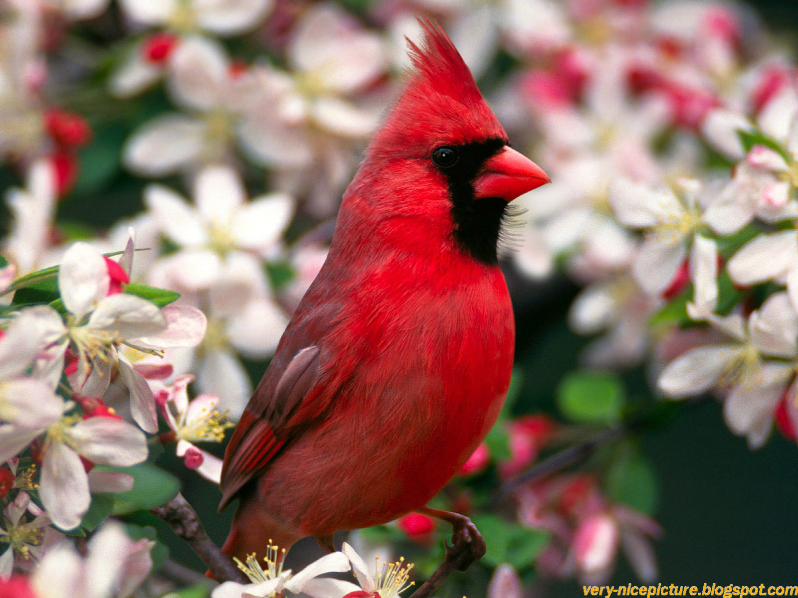 birds wallpapers  birds wallpaper  bird wallpaper  bird wallpapers