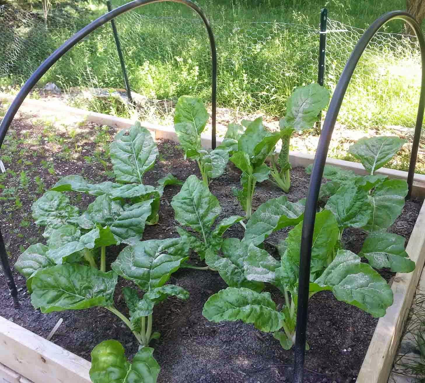 Diatomaceous Earth Garden Safe Bed Bugs