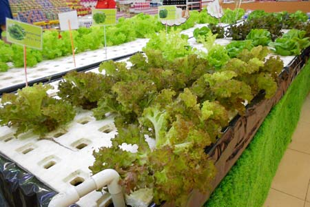 A Vegetable Garden Inside a Supermarket | The Creativity Window