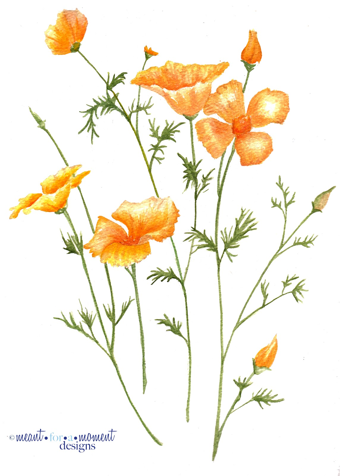 Meant For A Moment Designs California Poppies Watercolor