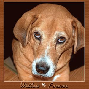 Farewell Sweet Wilow