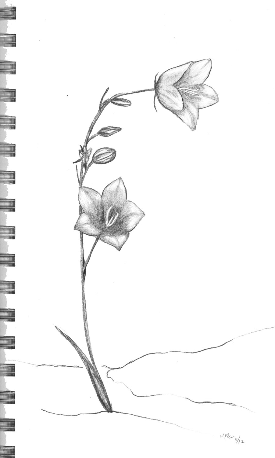Small Flowers Line Drawing : Pen pencil paper—draw sorting out your brain for drawing