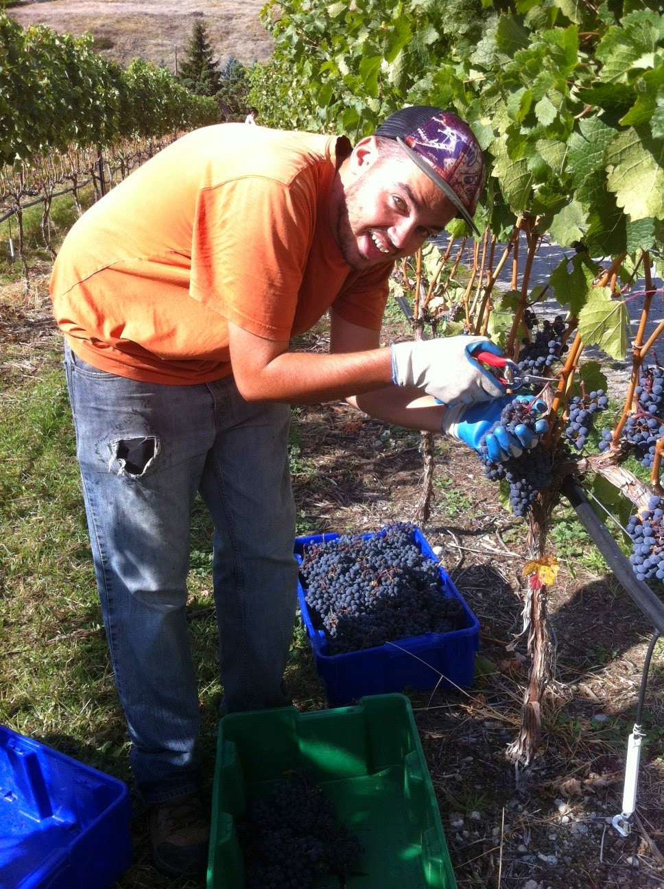 Artist Will Hoffman working in the vineyard