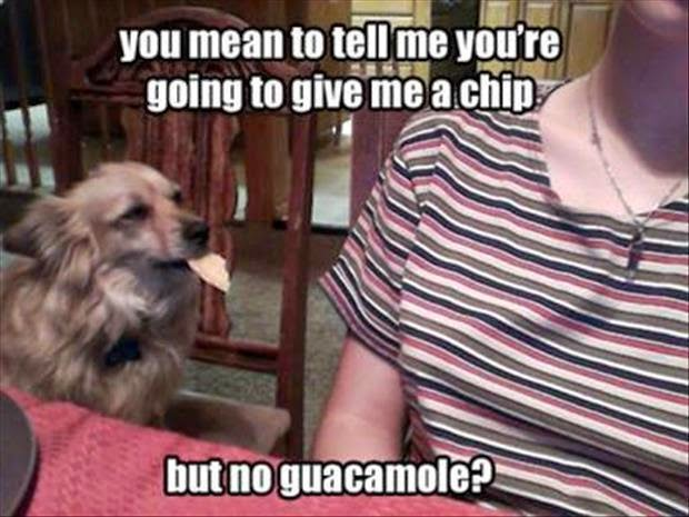 Funny animal captions, animal pictures with saying, funny captioned pictures