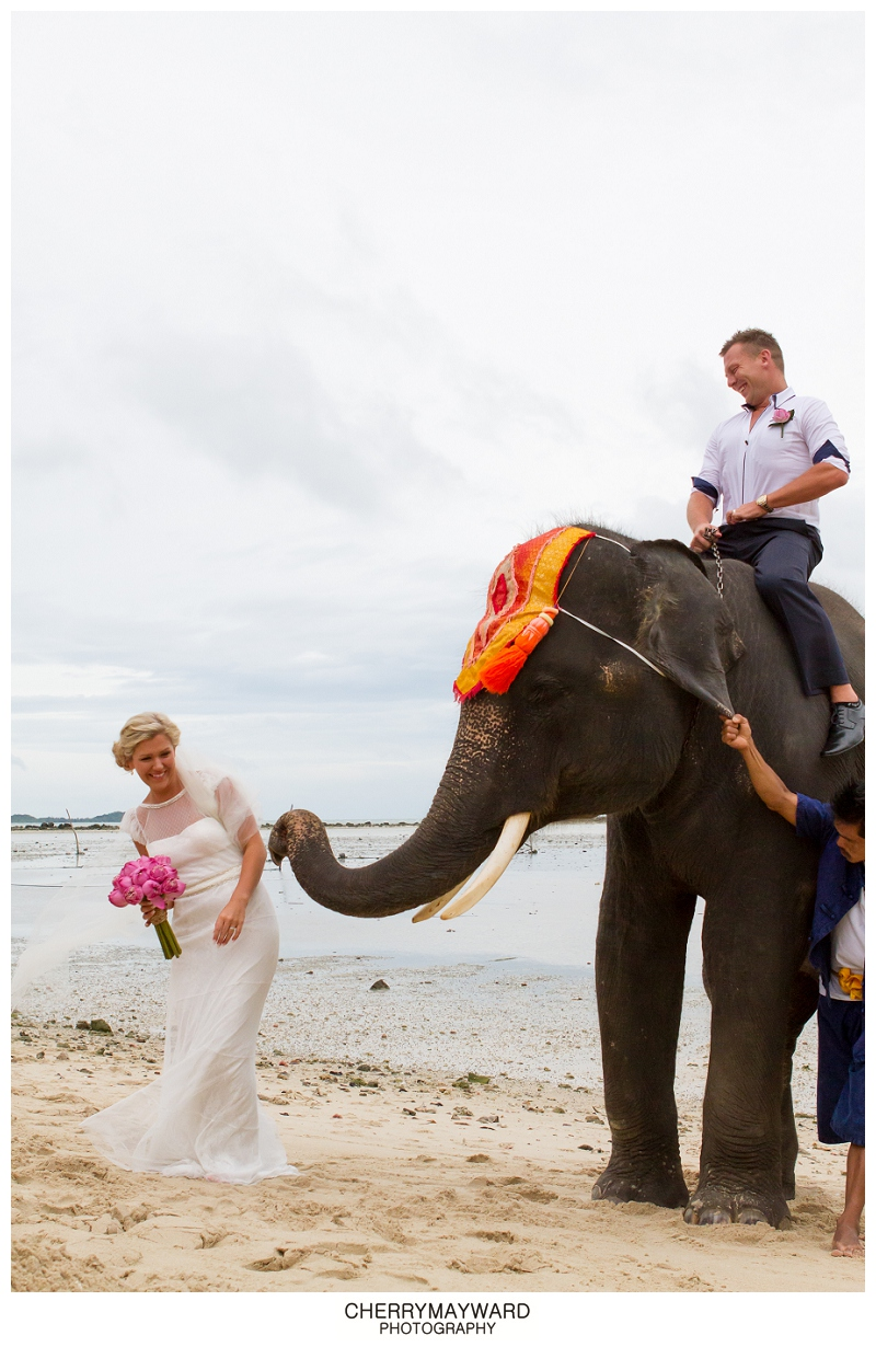 Bride and Groom with Elephant, Koh Samui, Thailand Wedding, Laughing, cheeky, elephant reaching out to touch the bride, destination wedding