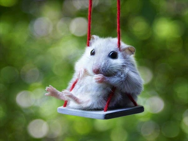 mouse on a swing