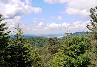 Blick von der Mahlberg-Flanke Richtung Rheintal