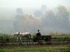 Harvest Time in Ukraine