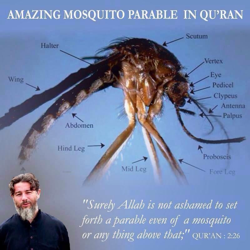 сервисное обслуживание притча о комаре в коране Цены вполне могли