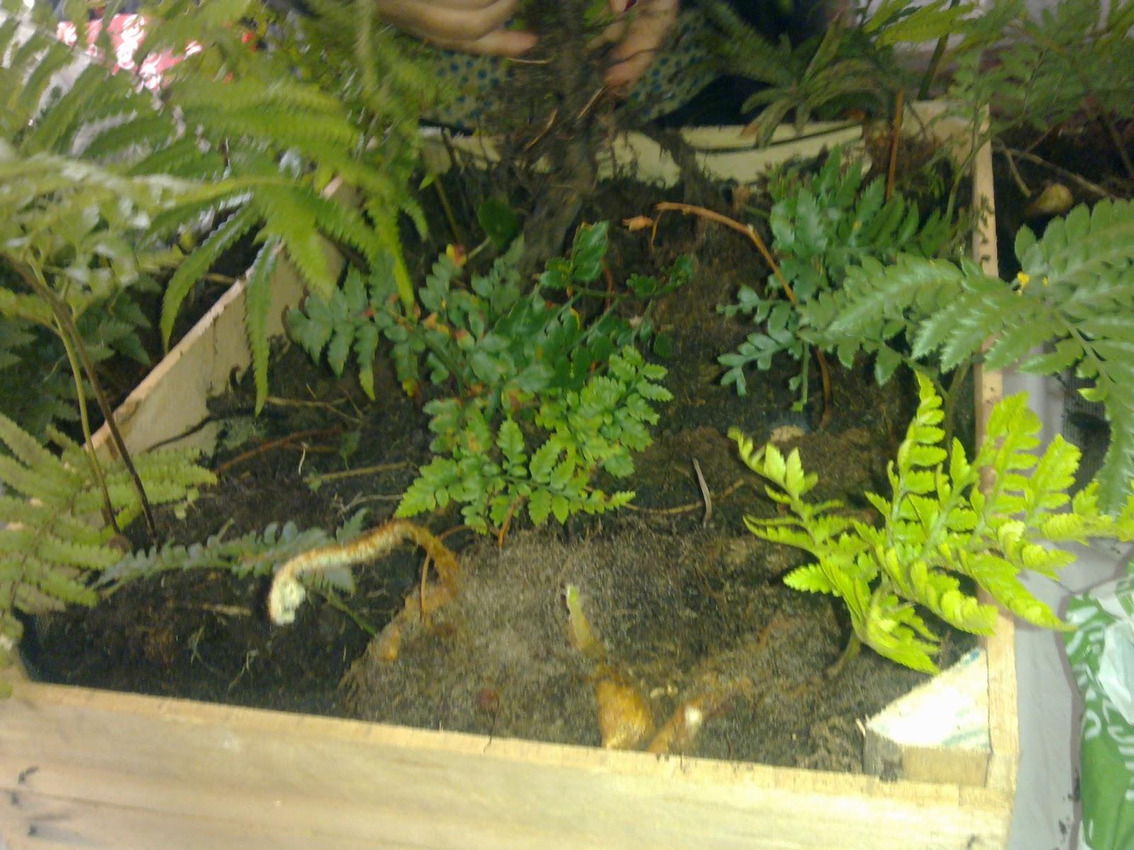para plantas pequeas colocar sobre la superficie del cajn una malla y sostenerla con grampas o clavitos